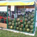 В Люберецком районе незаконная торговля не доживет до осени