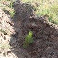 Порядка 1,1 тыс растений высадят в Люберцах на экоакции в субботу