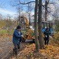 За неделю в Люберцах опилили и вырубили около 30 аварийных деревьев