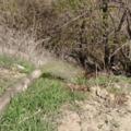 Адмтехнадзор в «Засаде» поймал водителя, сливавшего в реку грязную жидкость