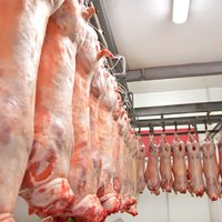 Производство мяса в ассортименте, продажа оптом