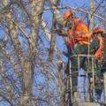 В Люберецком районе началась уборка: опилили и вырубили первые деревья