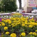 Люберцы засаживают цветами