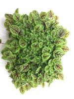 Микрозелень Люберцы
