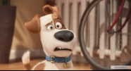 Фотография из фильма Тайная жизнь домашних животных