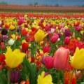 Коммунальщики Люберец готовят клумбы к будущей весне
