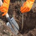 «Лес Победы» соберет в субботу более  500 люберчан