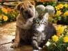 Вызывная ветеринарная служба ДИНГО