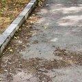 В Люберцах нарушители заплатят 70 тыс рублей за ненадлежащее содержание территории