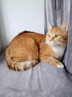 Коты в добрые руки г.Люберцы